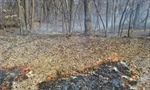 Fontenelle Forest to Conduct Prescribed Burns this Weekend